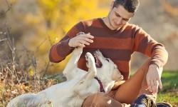 Toulouse, deuxième meilleure ville de France pour vivre avec son chien