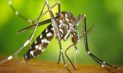 Un cas de Zika à Tournefeuille