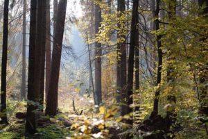 Diversifier son patrimoine avec un placement en parts de Groupement forestier