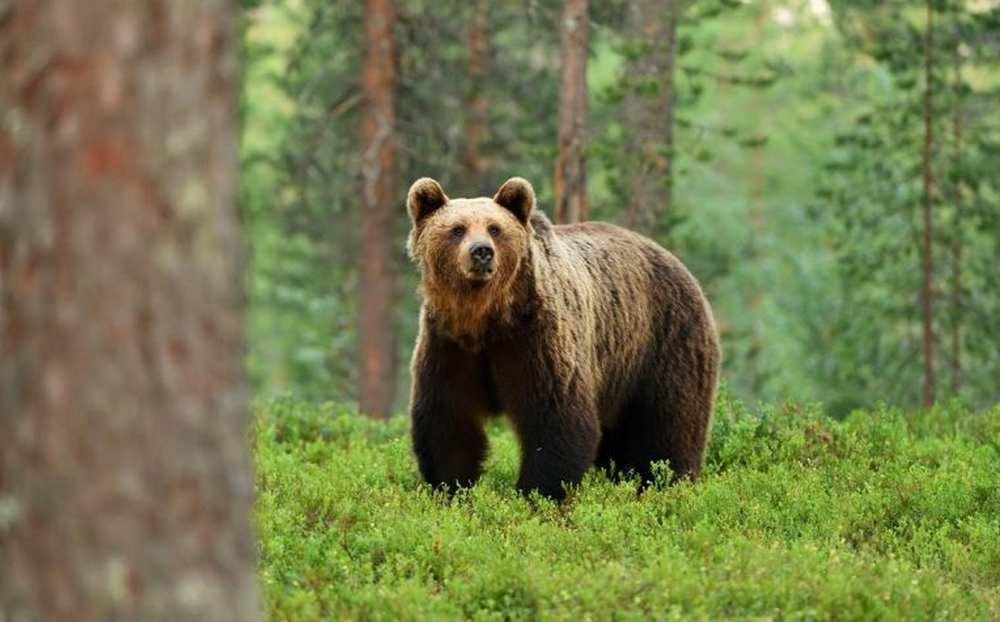 un ourson retrouvé près d'un village