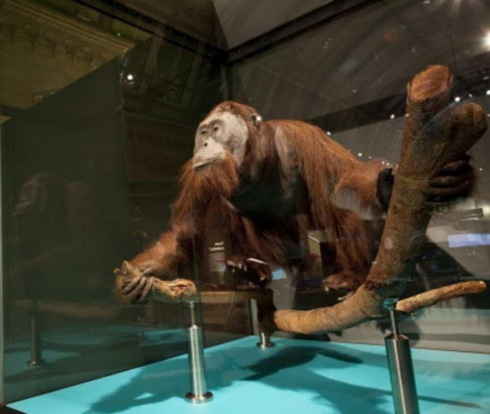 Toulouse. Extinctions-la fin d'un monde ? Une exposition unique au Muséum de Toulouse cdr
