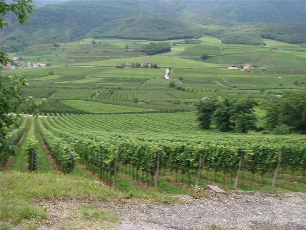 Béziers. Viticulteurs et vignerons main dans la main face à la crise cdr