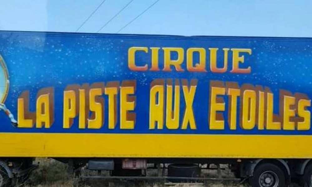 Argelès-sur-Mer. Deux éléphants s'échappent d'un cirque cdr