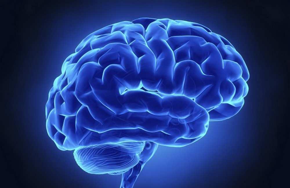 Toulouse. Semaine du cerveau au Quai des savoirs et au Muséum cdr