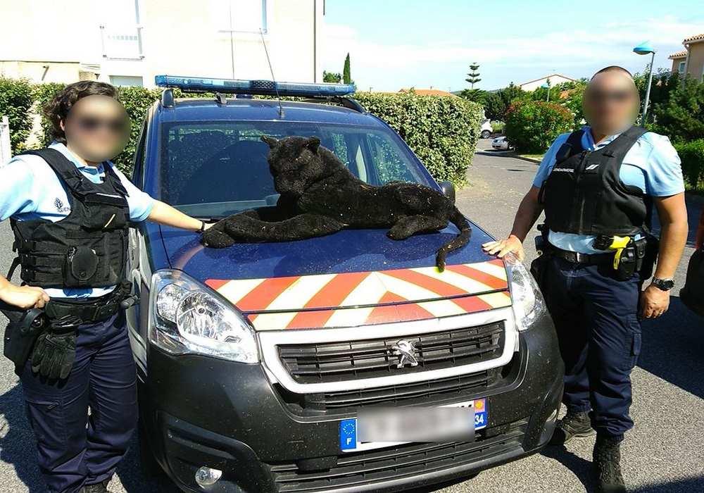 Pyrénées-Orientales. Les gendarmes interviennent pour une panthère...en peluche